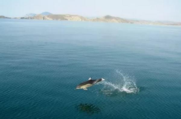 Черное море для детей доклад 690